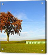 Tree And Hay Bales Acrylic Print by Aged Pixel