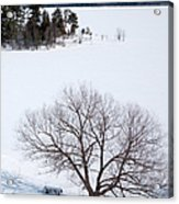 Tree And The Point In Winter Acrylic Print by Rob Huntley