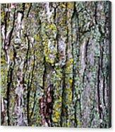 Tree Bark Detail Study Acrylic Print by Design Turnpike
