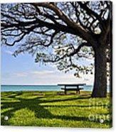 Tree Canopy Acrylic Print by Gina Savage