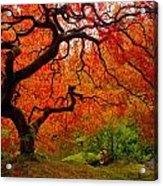 Tree Fire Acrylic Print by Darren  White