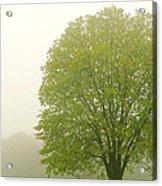 Tree In Fog Acrylic Print by Elena Elisseeva