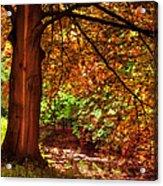 Tree In The Park. De Haar Castle. Utrecht  Acrylic Print by Jenny Rainbow