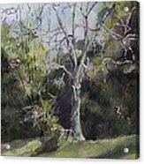 Tree Acrylic Print by Janet Felts