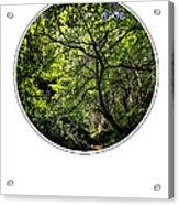 Tree Of Life Acrylic Print by Holly Martin