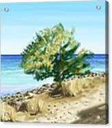 Tree On The Beach Acrylic Print by Veronica Minozzi