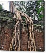 Tree Roots On Ruins At Angkor Wat Acrylic Print by Sami Sarkis