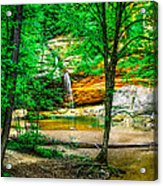 Tree Roots Acrylic Print by Optical Playground By MP Ray