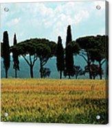 Tree Row In Tuscany Acrylic Print by Heiko Koehrer-Wagner