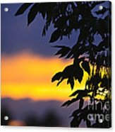 Tree Silhouette Over Sunset Acrylic Print by Elena Elisseeva