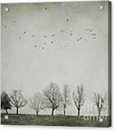 Trees And Birds Acrylic Print by Diana Kraleva