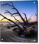 Trees At Driftwood Beach Acrylic Print by Debra and Dave Vanderlaan