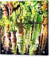 Trees Acrylic Print by Daniel Janda