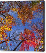 Treetops In Fall Forest Acrylic Print by Elena Elisseeva