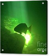Tropical Fish Shilouette In A Cenote Acrylic Print by Halifax photography by John Malone