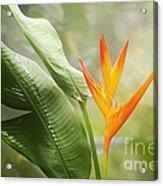Tropical Flower Acrylic Print by Natalie Kinnear