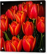 Tulip Bouquet Acrylic Print by Brian Xavier
