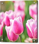 Tulip Time Acrylic Print by Angela Doelling AD DESIGN Photo and PhotoArt