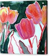 Tulips For The Love Of Patches Acrylic Print by Kathy Braud