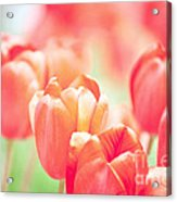 Tulips In The Sun Acrylic Print by Kay Pickens