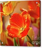 Tulips Acrylic Print by Kathleen Struckle