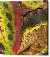 Turning Leaves 2 Acrylic Print by Stephen Anderson