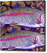 Two Beauties - Trout Acrylic Print by Laird Roberts