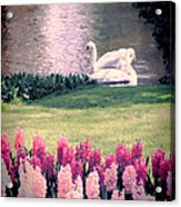 Two Swans Acrylic Print by Jasna Buncic