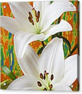 Two White Lilies Acrylic Print by Garry Gay
