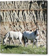 Two Wild White Stallions Acrylic Print by Sabrina L Ryan