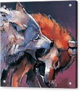 Two Wolves Acrylic Print by Mark Adlington