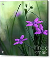 Ultra Violet Acrylic Print by Neal  Eslinger