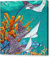 Under The Bahamian Sea Acrylic Print by Daniel Jean-Baptiste