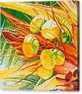 Under The Coconut Palm Acrylic Print by Janis Grau