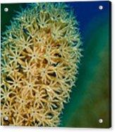 Underwater Gorgonian Acrylic Print by Jean Noren