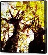 Untitled-twin Trees Acrylic Print by Juliann Sweet