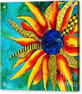 Urchin Acrylic Print by Shannan Peters