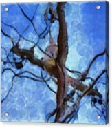Utility Pole Acrylic Print by Ayse Deniz