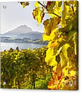 Vineyard At Lake Lucerne Acrylic Print by George Oze