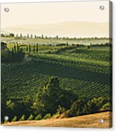 Vineyard From Above Acrylic Print by Clint Brewer