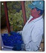 Vineyard Harvest IIi Acrylic Print by Donna Schaffer