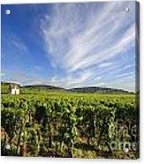 Vineyard Hut. Vineyard. Cote De Beaune. Burgundy. France. Europe Acrylic Print by Bernard Jaubert