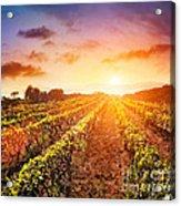 Vineyard Acrylic Print by Mythja  Photography