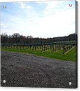 Vineyards In Va - 121267 Acrylic Print by DC Photographer