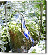 Vinsanchi Glass Art-3 Acrylic Print by Vin Kitayama