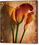 Vintage Calla Lily Acrylic Print by Jessica Jenney
