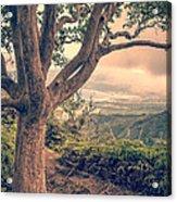 Waihee Ridge Trail Maui Hawaii Acrylic Print by Edward Fielding