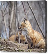 Waiting For Mom Acrylic Print by Thomas Young