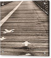 Walk This Way Acrylic Print by JC Findley