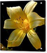 Warm Glow Acrylic Print by Rona Black
